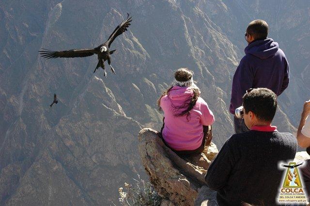 Mirador la Cruz del Cóndor (Cañón del Colca)